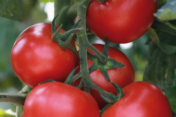 Tomate Grappelina