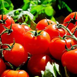Tomates grappes par le Collectif d'Uregnce